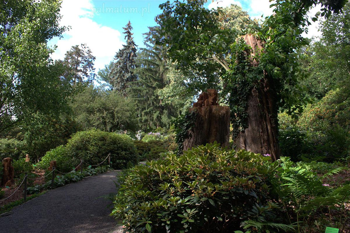 Arboretum W Wojsławicach Palmatum Blog