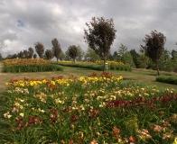 arboretum Wojsławice - wzgórze lilii