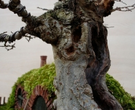 BagEnd-bonsai_20