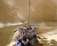 kusamono - wystawa bonsai Wojsławice 2018