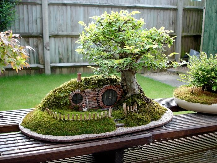 Back End bonsai - lato