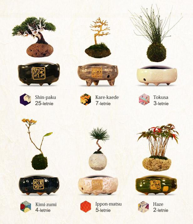 Air Bonsai przykłady