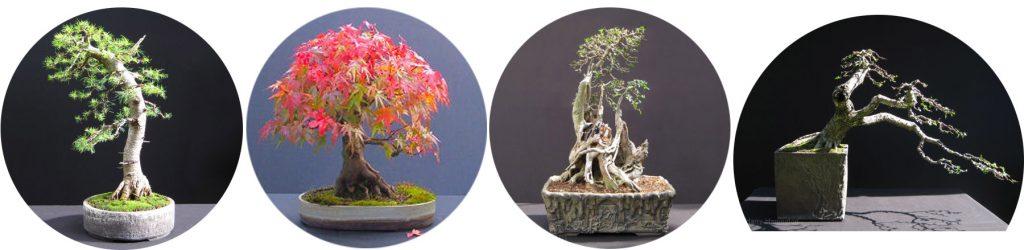 Tekstura donicy bonsai