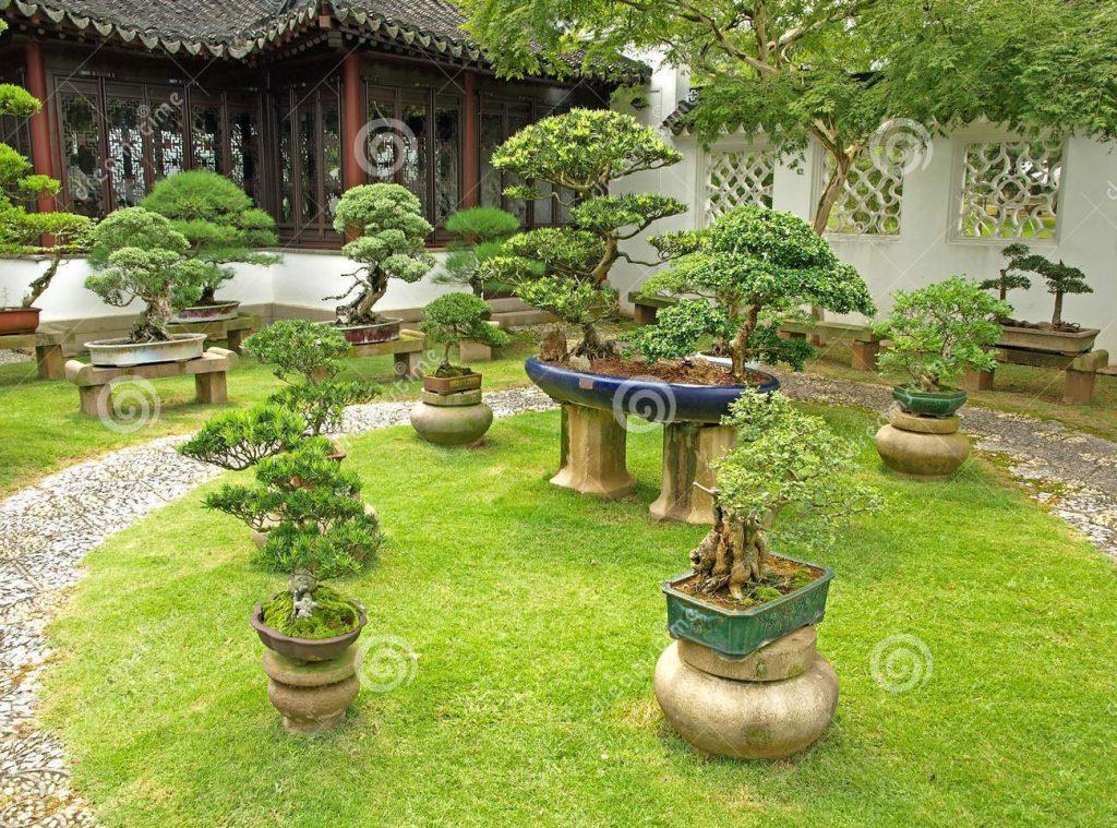 Prezentacja bonsai na kamiennych elementach