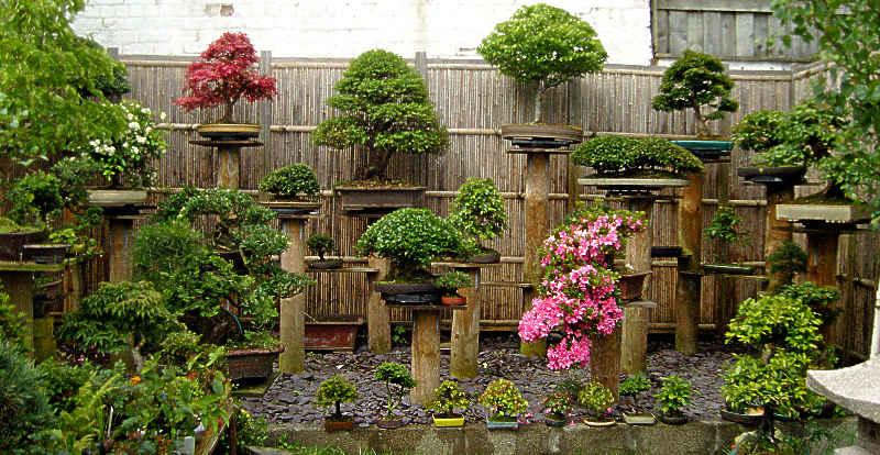 Ekspozycja bonsai na słupkach