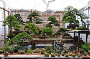 Zakątek bonsai