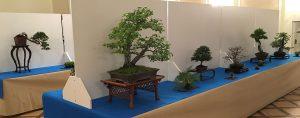 Wystawa bonsai Książ 2017