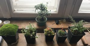 rośliny uzupełniające krajobraz naskalny