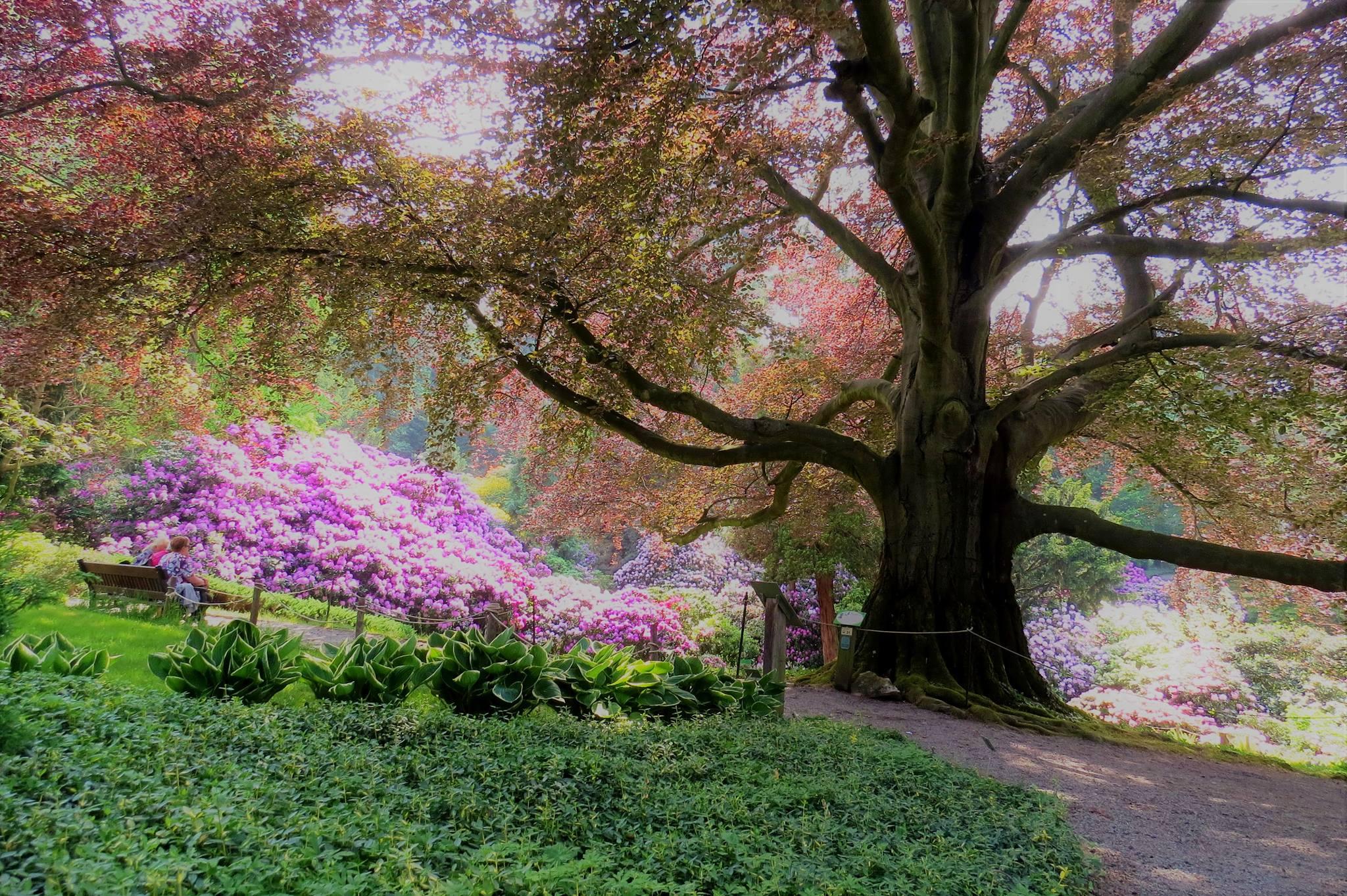 Wystawa bonsai arboretum Wojsławice 20 lat bonsai w Polsce – zapowiedź
