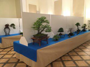 wystawa bonsai Książ