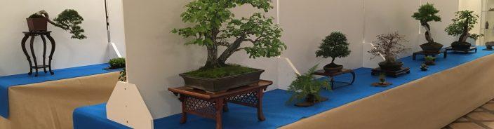Wystawa bonsai Zamek Książ 2018 – zapowiedź