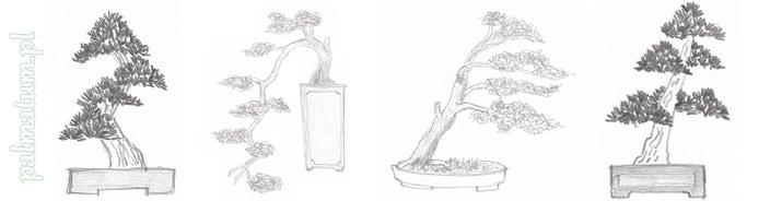 Style bonsai – odwzorowanie działań natury w bonsai