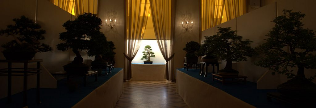 wystawa bonsai Książ 2018