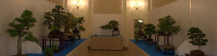 Wystawa bonsai Książ 2018 – galeria zdjęć