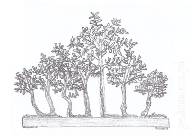 yose-uye (styl z wieloma drzewami)