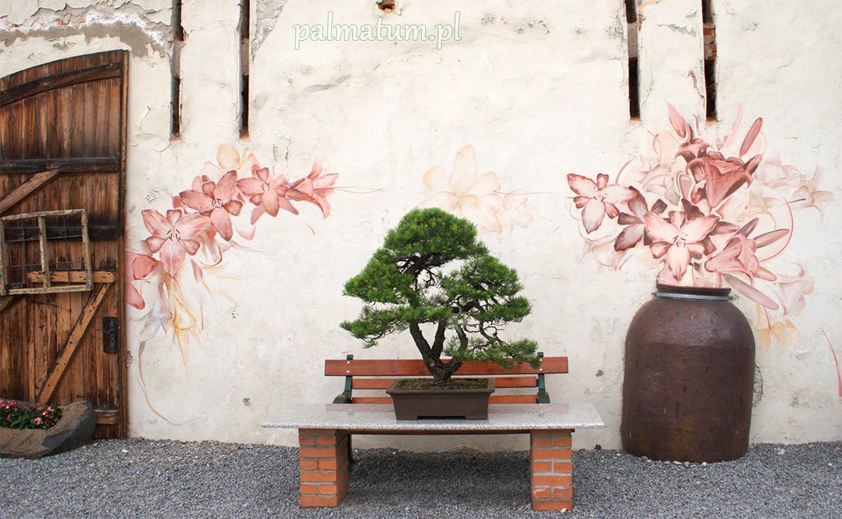 Wystawa bonsai 2018 Wojsławice arboretum