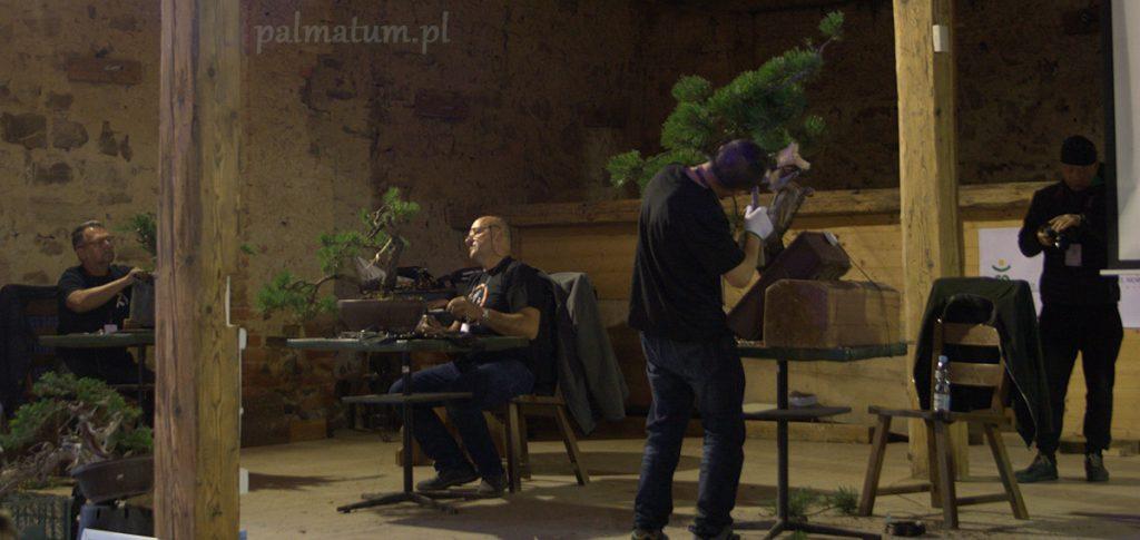 Wojsławice pokazy formowania bonsai
