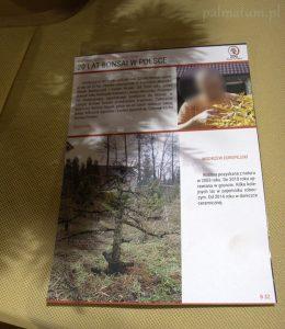 opis drzewka bonsai