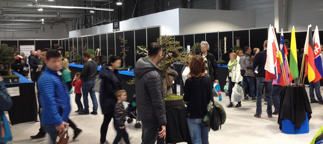 Green Days 2019 wystawa bonsai Dąb Polski – galeria zdjęć
